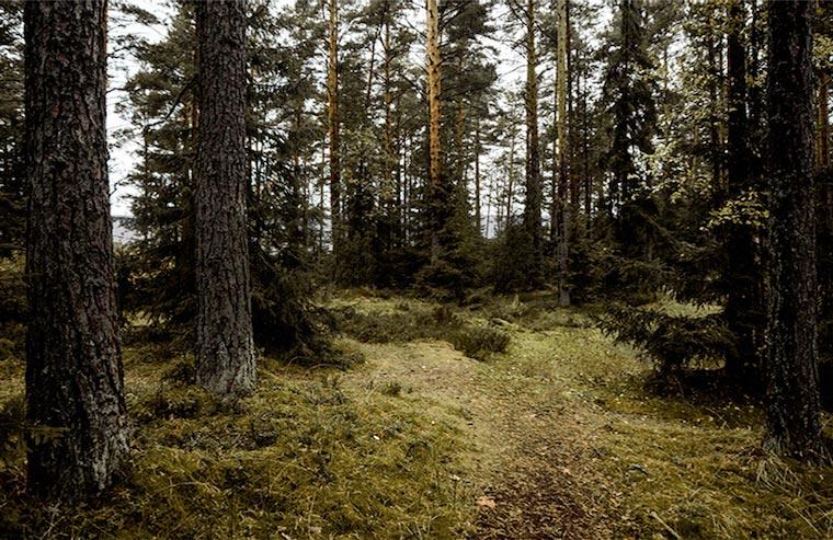 осень.  вид  на лес  и  залив  от  шале  N6